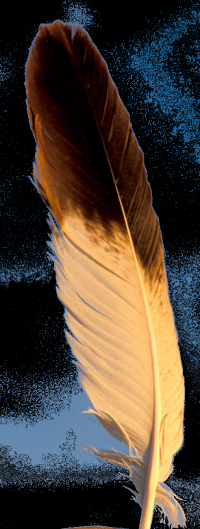 Eagle_Feather1